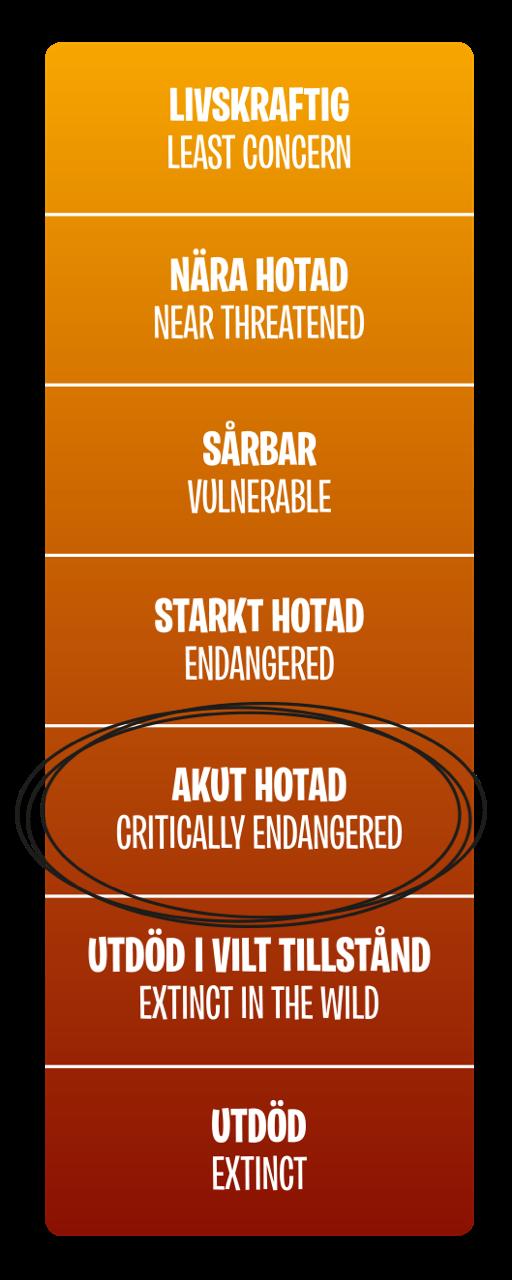 Hotnivå, Akut hotad (Critically endangered)