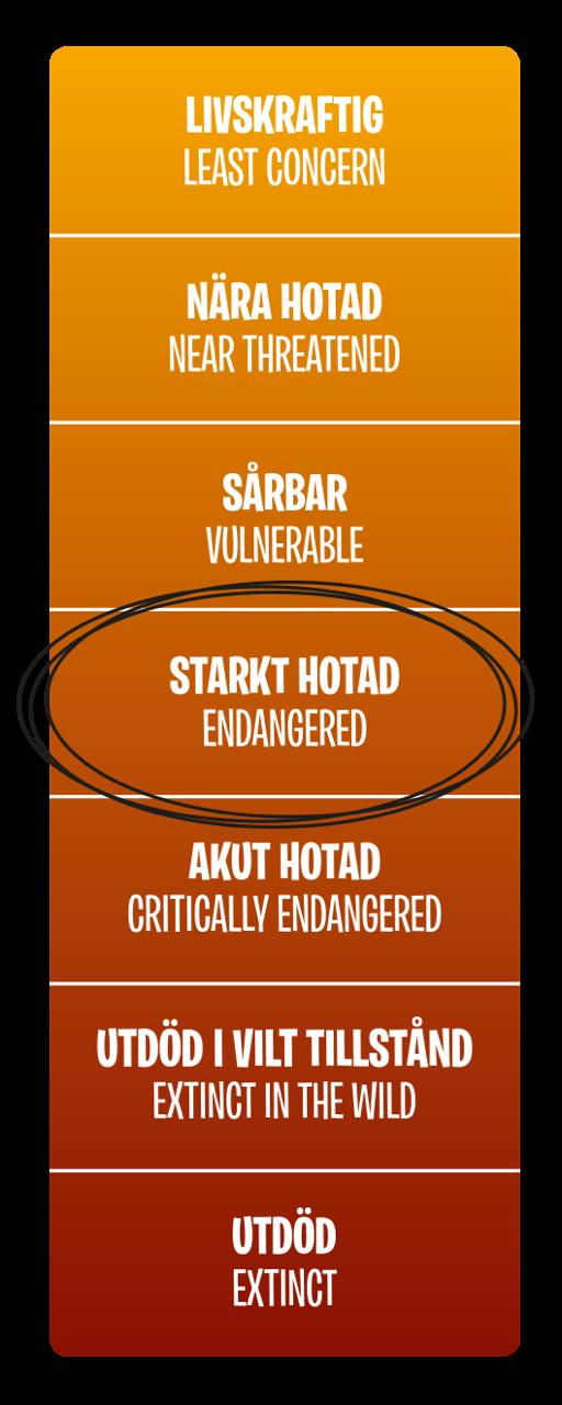 Hotnivå, Starkt hotad (Endangered)