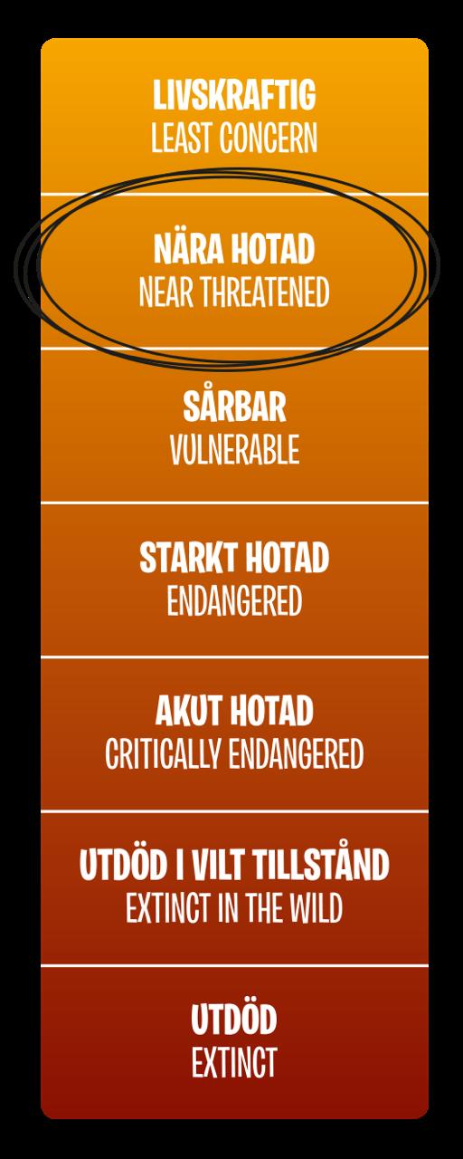 Hotnivå, Nära hotad (Near threatened)
