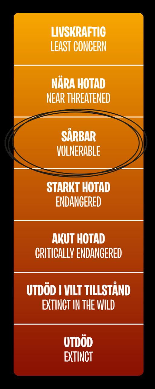 Hotnivå, Sårbar (Vulnerable)